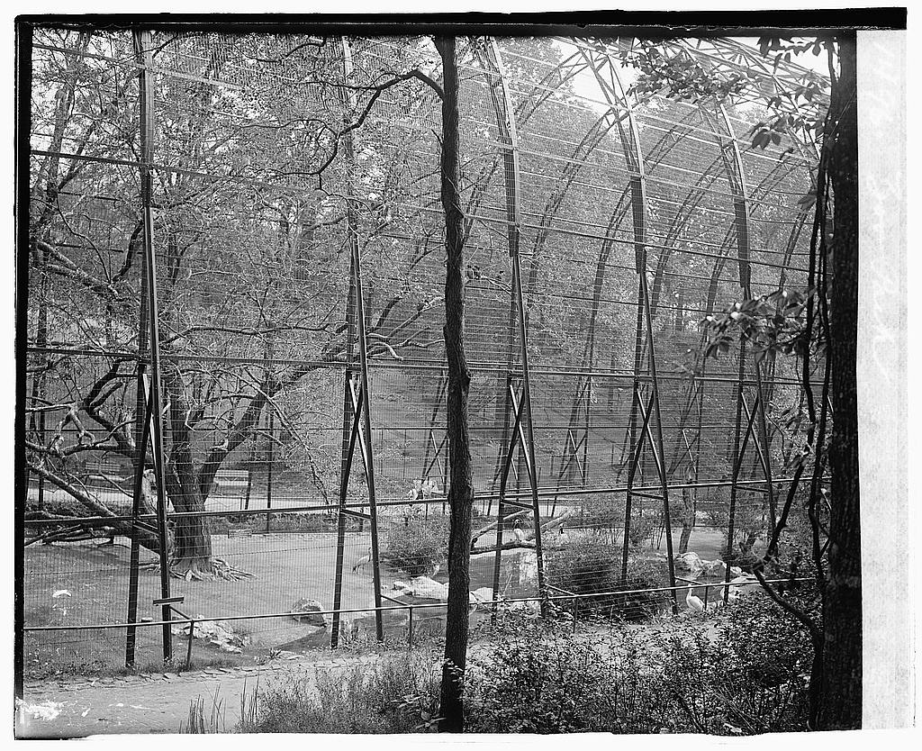 8 x 10 Reprinted Old Photo of Zoo Park 1919 National Photo Co  74a