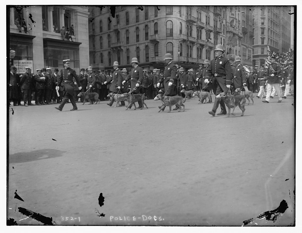 8 x 10 Photo of Police Dogs 1890-1920 G. Bain Collection 38a