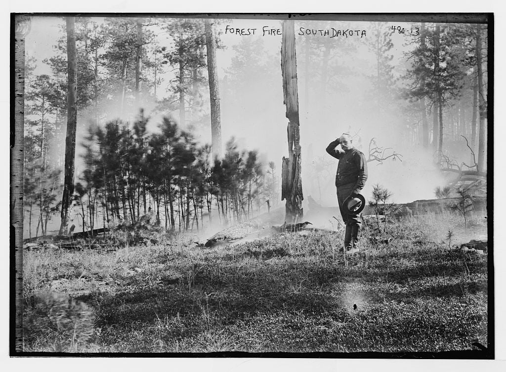 8 x 10 Photo of Man standing in cleared area in forest fire, South Dakota 1890-1920 G. Bain Collection 20a