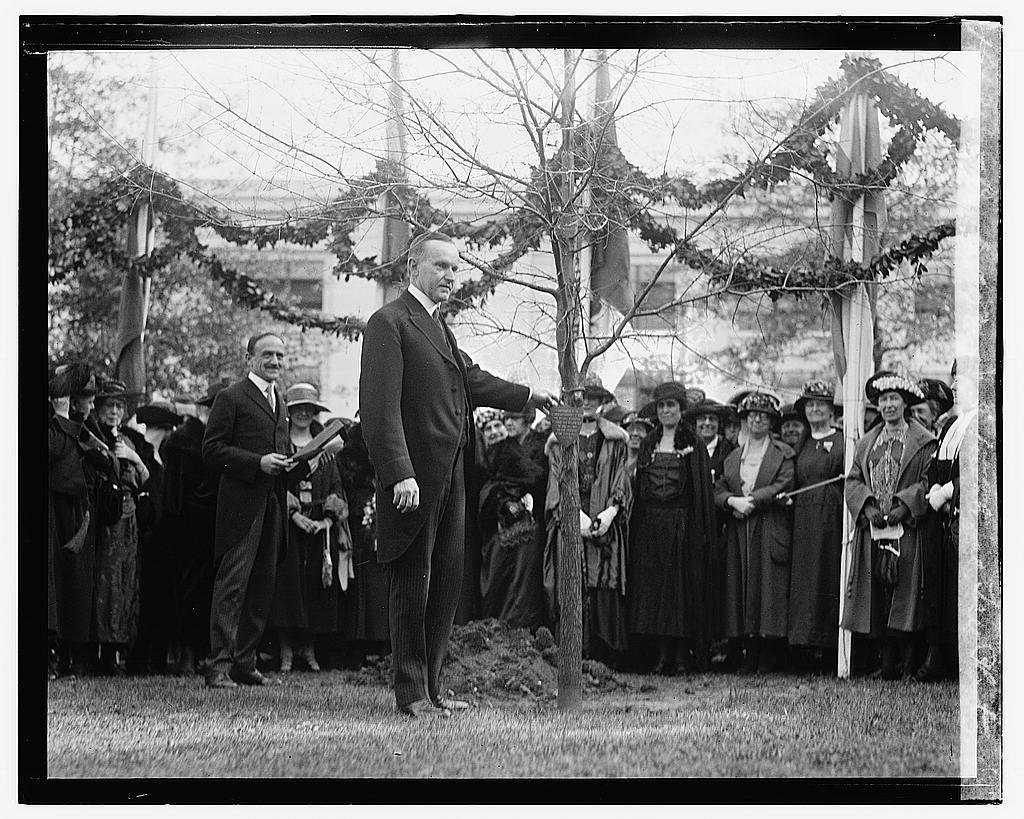 16 x 20 Gallery Wrapped Frame Art Canvas Print of Coolidge at International Tree Planting 1922 National Photo Co  33a