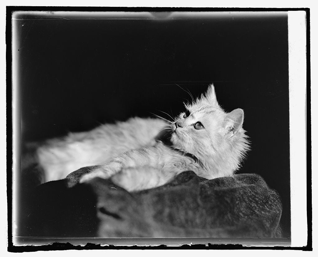 16 x 20 Reprinted Old Photo ofRadium King, Miss Beauchler cat 1925 National Photo Co  70a