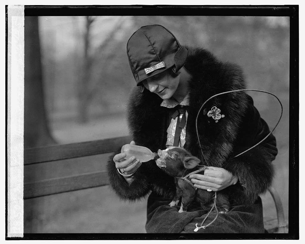 16 x 20 Gallery Wrapped Frame Art Canvas Print of Miss Lois Hoover & pet pig, 12/1/25 1925 National Photo Co  15a