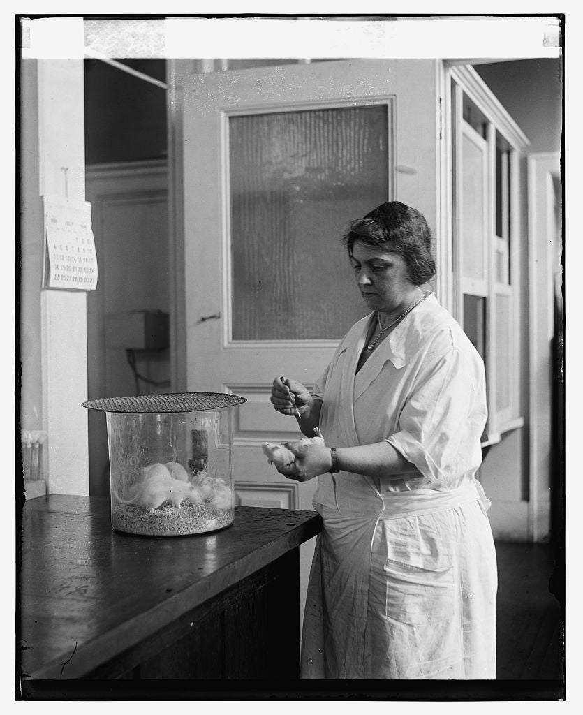 16 x 20 Reprinted Old Photo ofMrs. Sadie A. Carlin testing serum at U.S.P.H.S., 7/8/26 1926 National Photo Co  67a