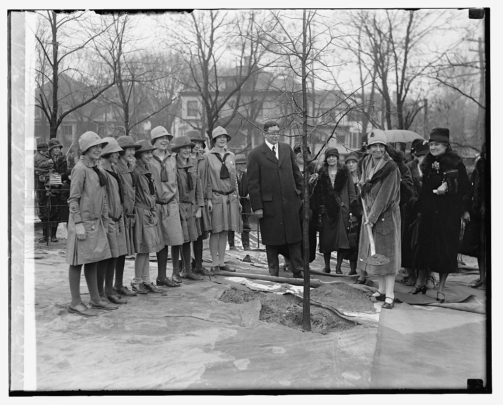 16 x 20 Reprinted Old Photo ofMrs. Coolidge plants a tree, 2/28/29 1929 National Photo Co  64a