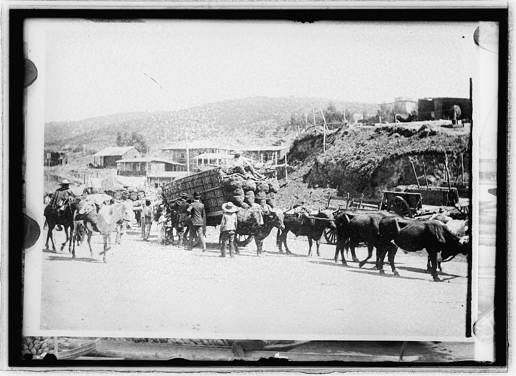 16 x 20 Reprinted Old Photo ofChile Oxteani in Valparaiso 1914 National Photo Co  49a