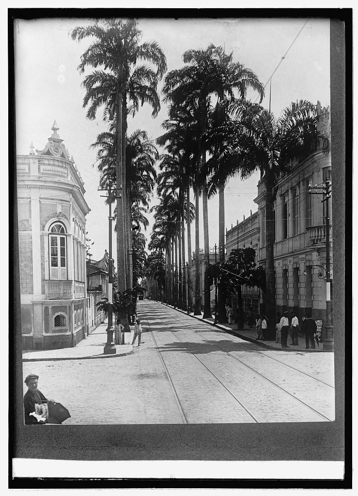 16 x 20 Reprinted Old Photo ofPalm Ave. Para, Brazil 1914 National Photo Co  02a