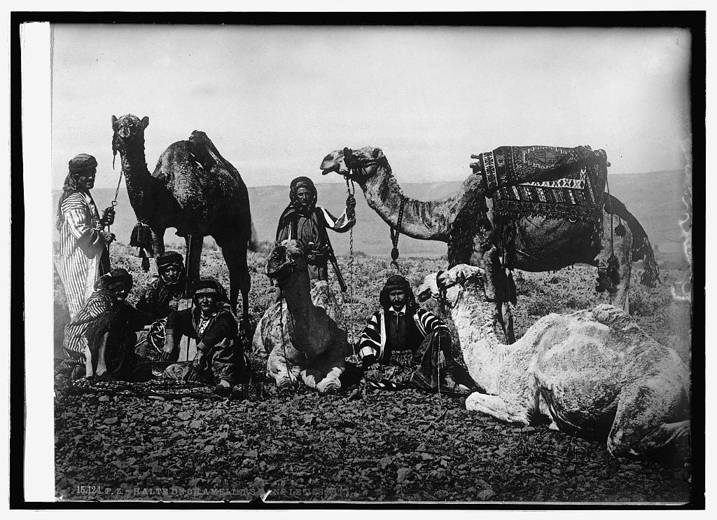 16 x 20 Reprinted Old Photo of Arabian desert 1914 National Photo Co  10a