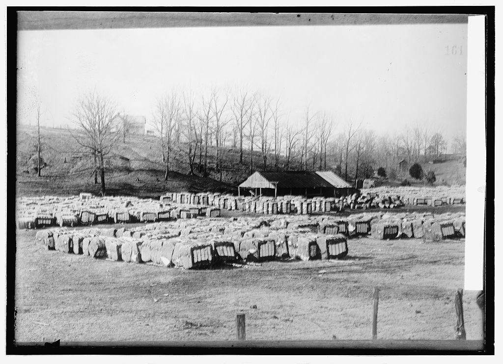 8 x 10 Reprinted Old Photo of Baled cotton 1914 National Photo Co  32a