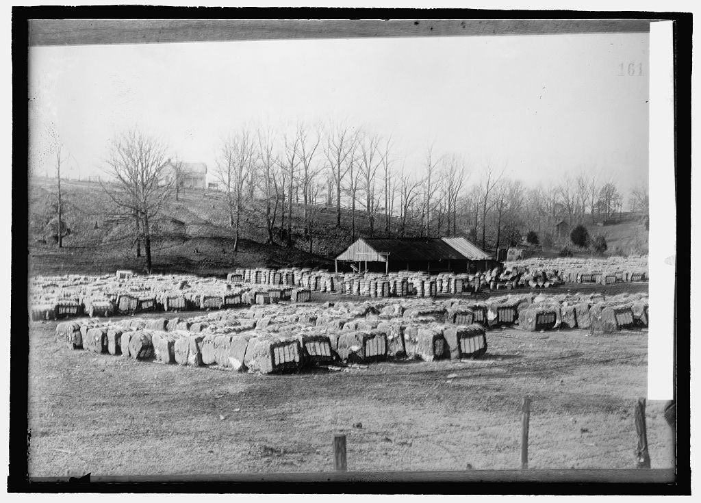8 x 10 Reprinted Old Photo of Baled cotton 1914 National Photo Co  53a