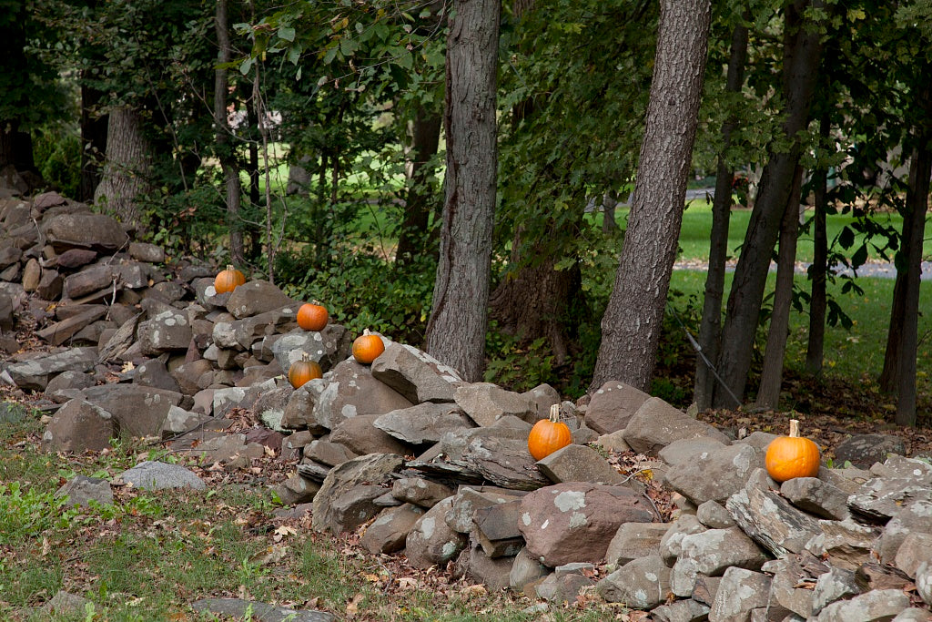 18 x 24 Photograph reprinted on fine art canvas  of Connecticut stone fences r13 2011 October by Highsmith, Carol M.