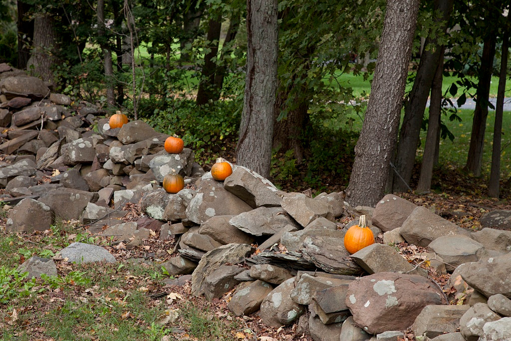 18 x 24 Photograph reprinted on fine art canvas  of Connecticut stone fences r14 2011 October by Highsmith, Carol M.