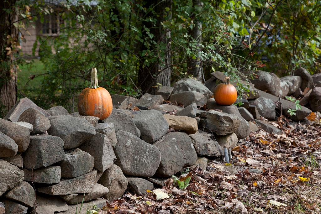 18 x 24 Photograph reprinted on fine art canvas  of Connecticut stone fences r15 2011 October by Highsmith, Carol M.