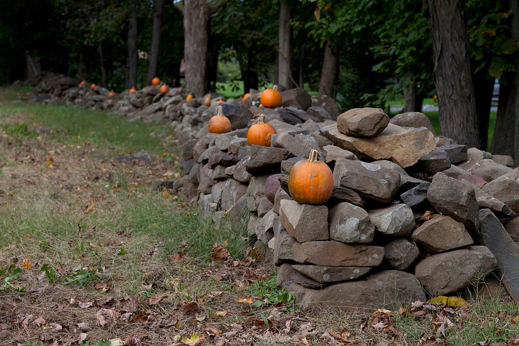 18 x 24 Photograph reprinted on fine art canvas  of Connecticut stone fences r17 2011 October by Highsmith, Carol M.
