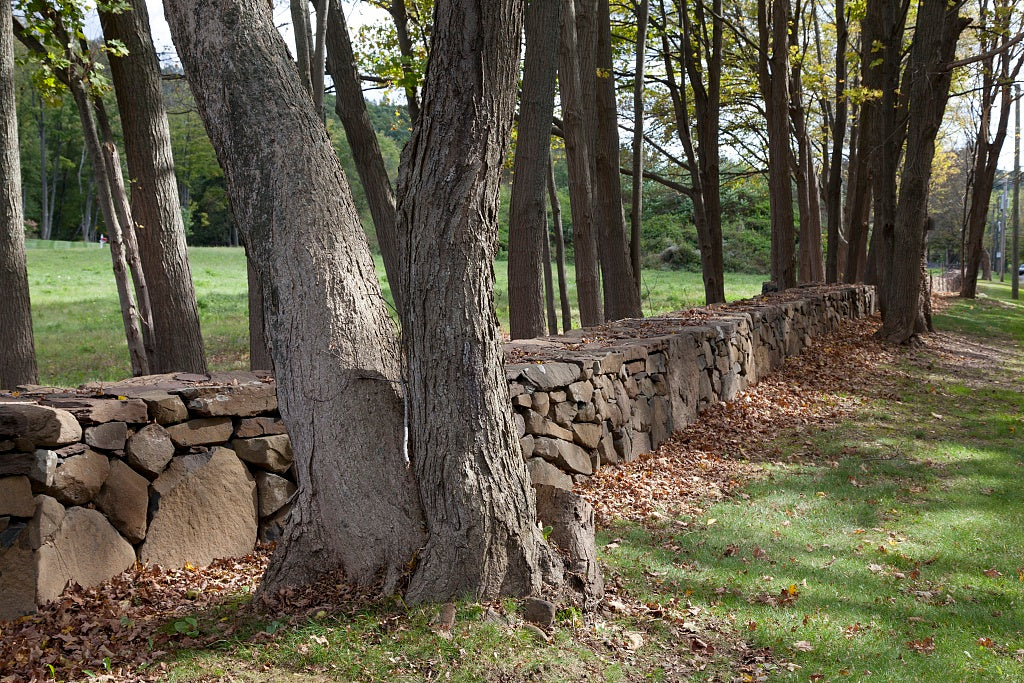 18 x 24 Photograph reprinted on fine art canvas  of Connecticut stone fences r22 2011 October by Highsmith, Carol M.