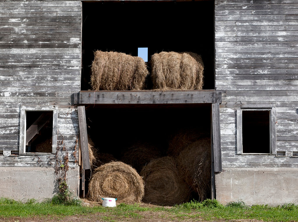 18 x 24 Photograph reprinted on fine art canvas  of Barn scene in Suffield Connecticut r35 2011 October by Highsmith, Carol M.