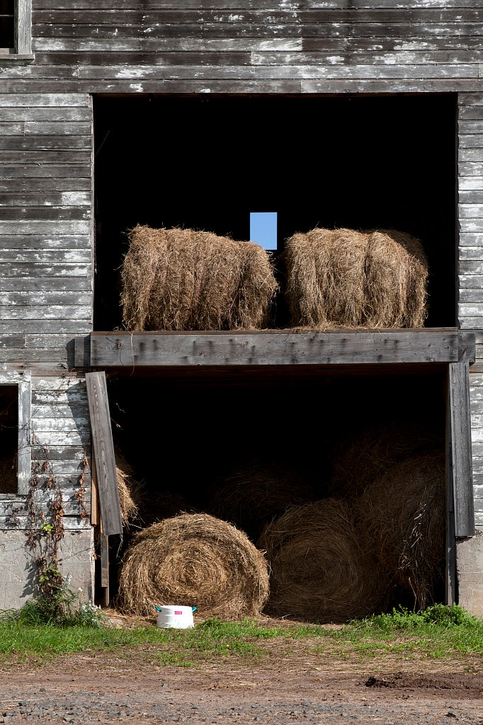 18 x 24 Photograph reprinted on fine art canvas  of Barn scene in Suffield Connecticut r38 2011 October by Highsmith, Carol M.