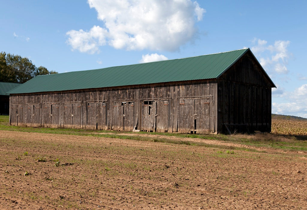 18 x 24 Photograph reprinted on fine art canvas  of Tobacco barns in Suffield Connecticut r44 2011 October by Highsmith, Carol M.