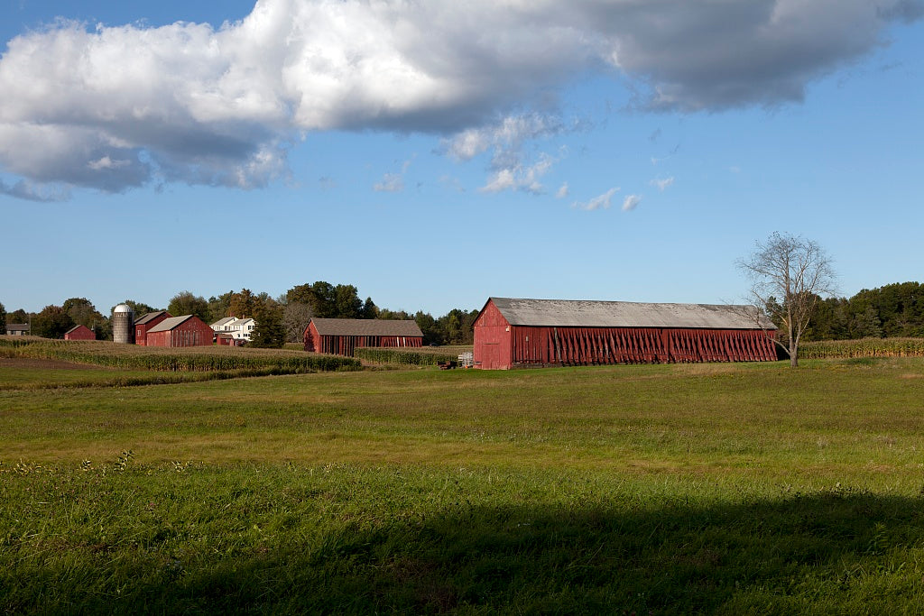 18 x 24 Photograph reprinted on fine art canvas  of Tobacco barns in Suffield Connecticut r61 2011 October by Highsmith, Carol M.
