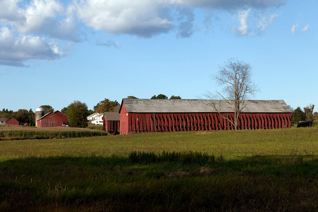 18 x 24 Photograph reprinted on fine art canvas  of Tobacco barns in Suffield Connecticut r64 2011 October by Highsmith, Carol M.