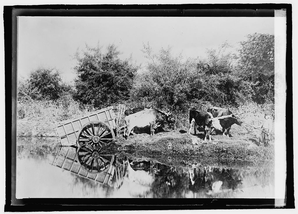 16 x 20 Reprinted Old Photo ofArgentine type of ox cart used in rural sections 1920 National Photo Co  75a