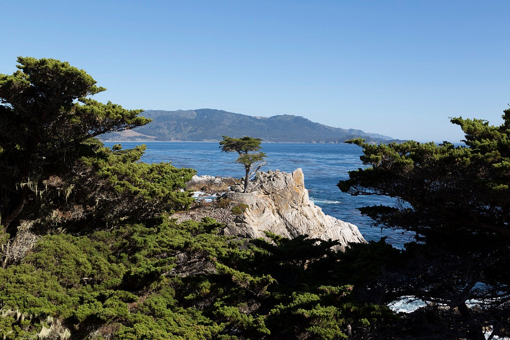 18 x 24 Photograph reprinted on fine art canvas  of Lone cypress on the 17-Mile Drive Monterey Peninsula California r99 2012 by Highsmith, Carol M.