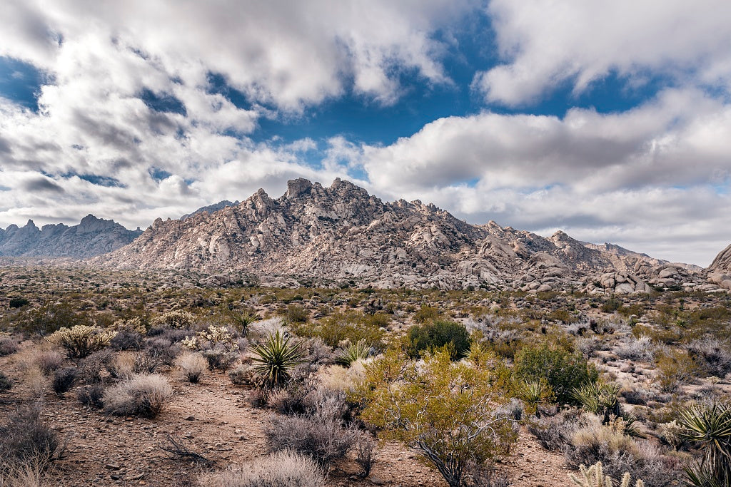 18 x 24 Photograph reprinted on fine art canvas  of A view of Granite Peak in the Providence Mountains from the desert floor in the Mojave National Preserve in southwestern California r18 2012 by Highsmith, Carol M.