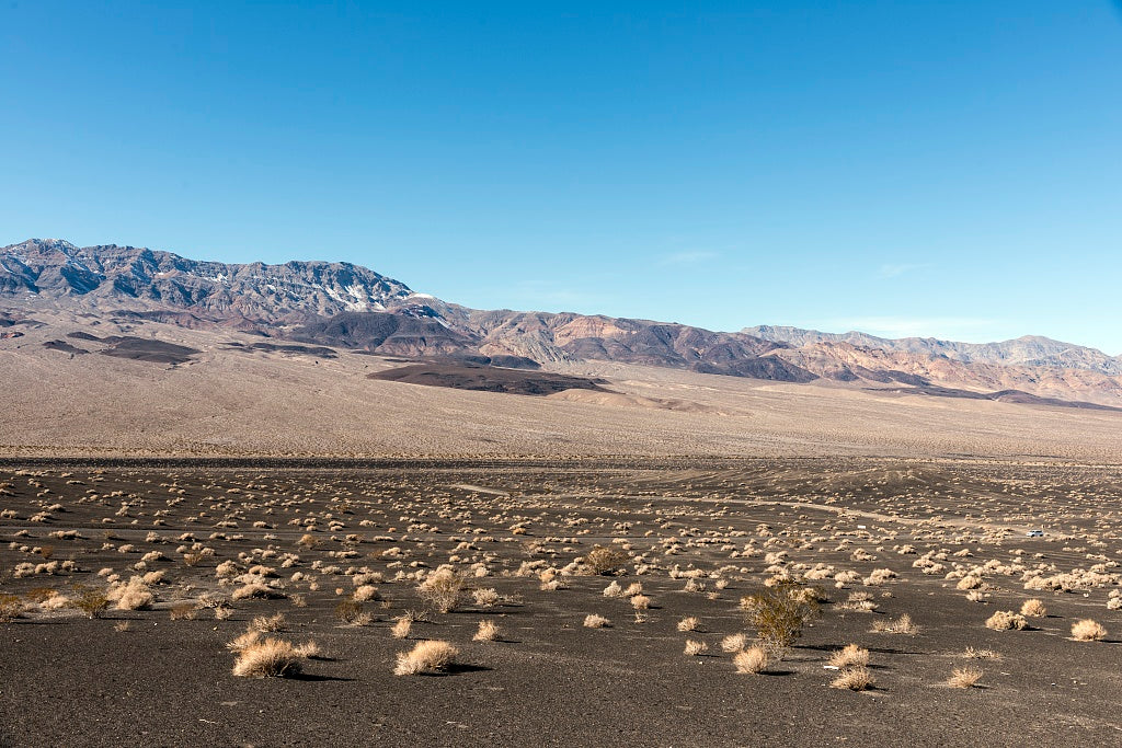 18 x 24 Photograph reprinted on fine art canvas  of A few scrubby shrubs survive on this playa in Death Valley National Park r70 2012 by Highsmith, Carol M.