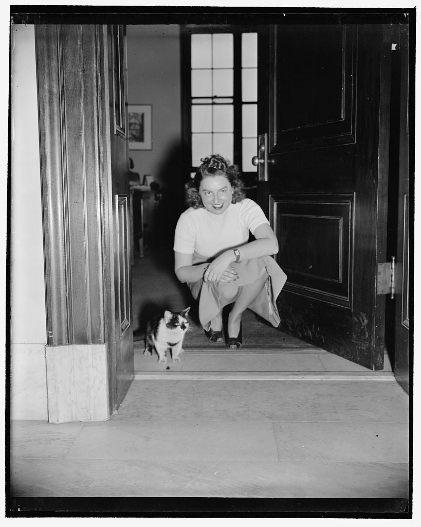 8 x 10 Reprinted Old Photo of Rosalie Sutton, Assistant Secretary Of Senator Claude Pepper Of Florida. The Cat Wandered Into The Senate Office Building 1940 Harris & Ewing 48a