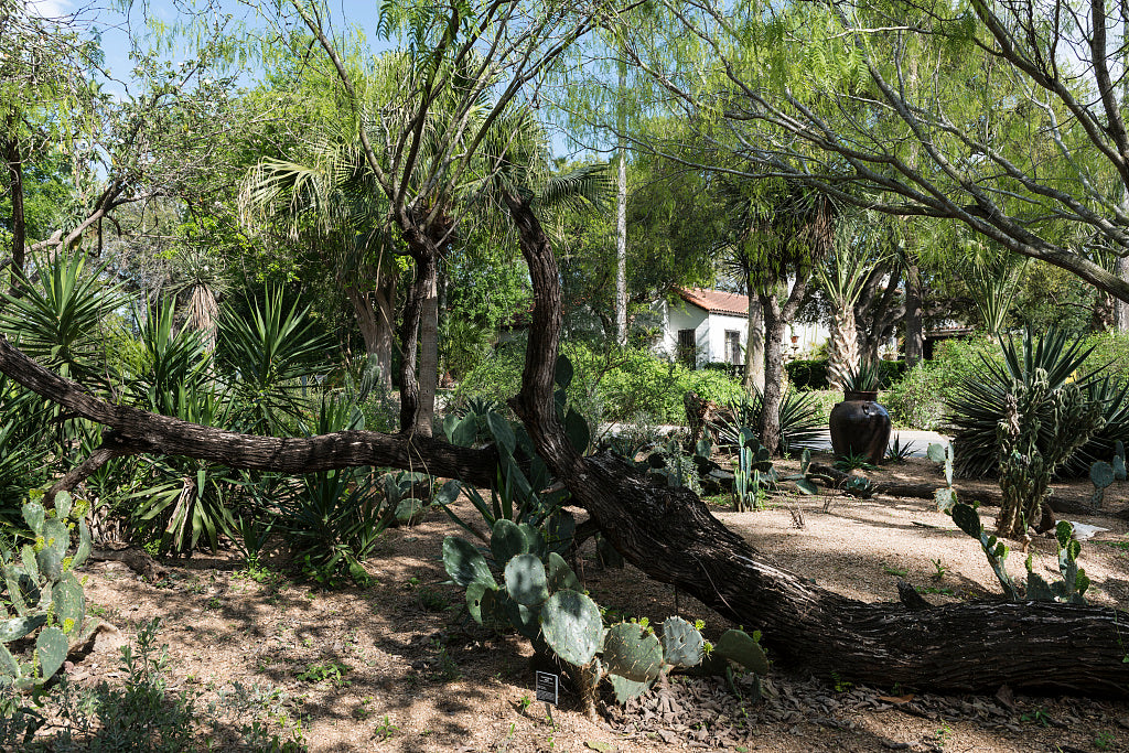 18 x 24 Photograph reprinted on fine art canvas  of Quinta Mazatlan a historical adobe mansion within a nature and birding center in McAllen Texas  r16 41711 by Highsmith, Carol M.