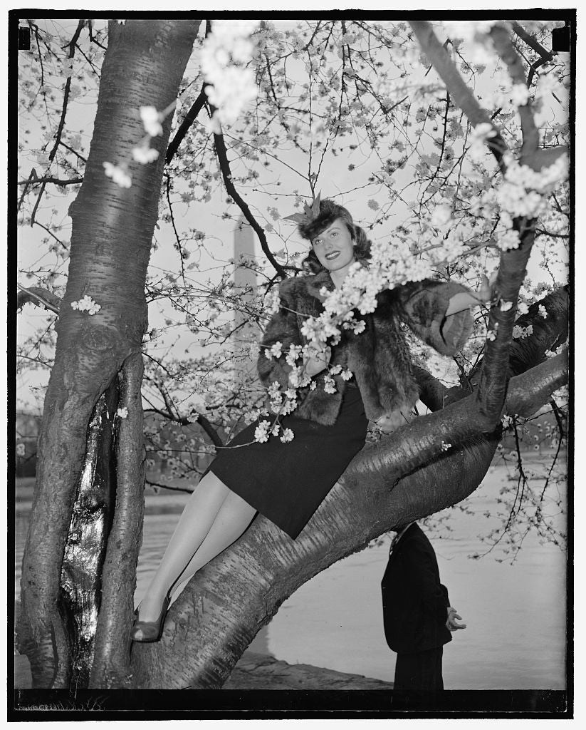 8 x 10 Reprinted Old Photo of Cherry Blossom Queen. Washington, D.C., March 28. Pretty Peggy Townsend, Who Will Be Crowned Cherry Blossom Queen At The Festival To Be Held Frida 1937 Harris & Ewing 74a