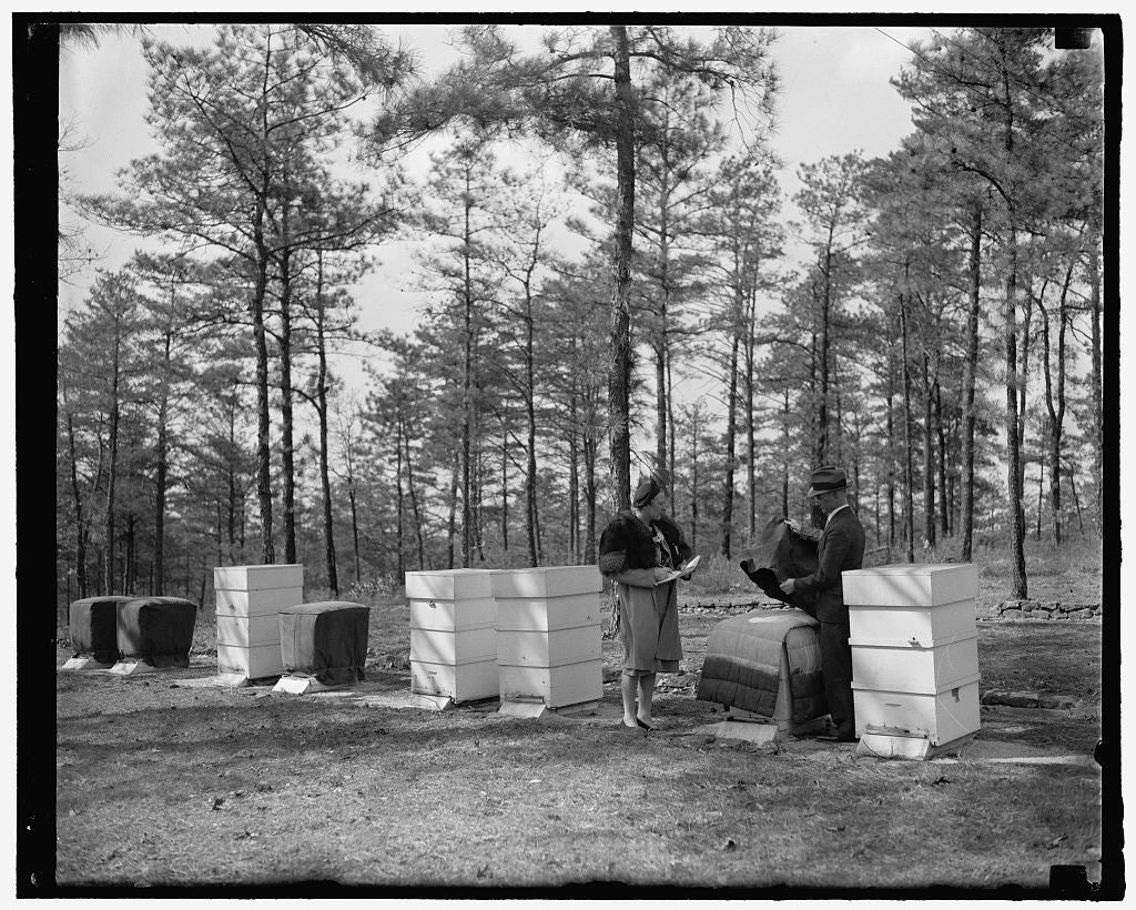 8 x 10 Reprinted Old Photo of Overcoats For Bees The Latest. Beltsville, Md., April 11. W.J. Nolan, Apiculturist Of The Bee Culture Laboratory At National Agricultural Research 1937 Harris & Ewing 46a
