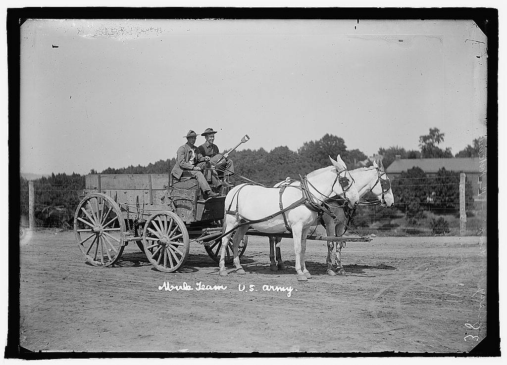 16 x 20 Reprinted Old Photo ofU.S. Army mule team & wagon 1925 National Photo Co  71a
