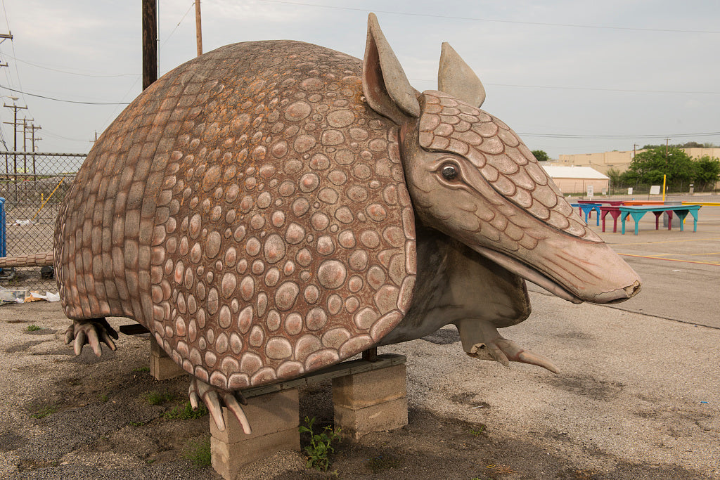 18 x 24 Photograph reprinted on fine art canvas  of An oversized armadillo the informal mascot at Bussey's Flea Market a gathering of merchants selling assorted wares from tables over a several-block area in Schertz a northe