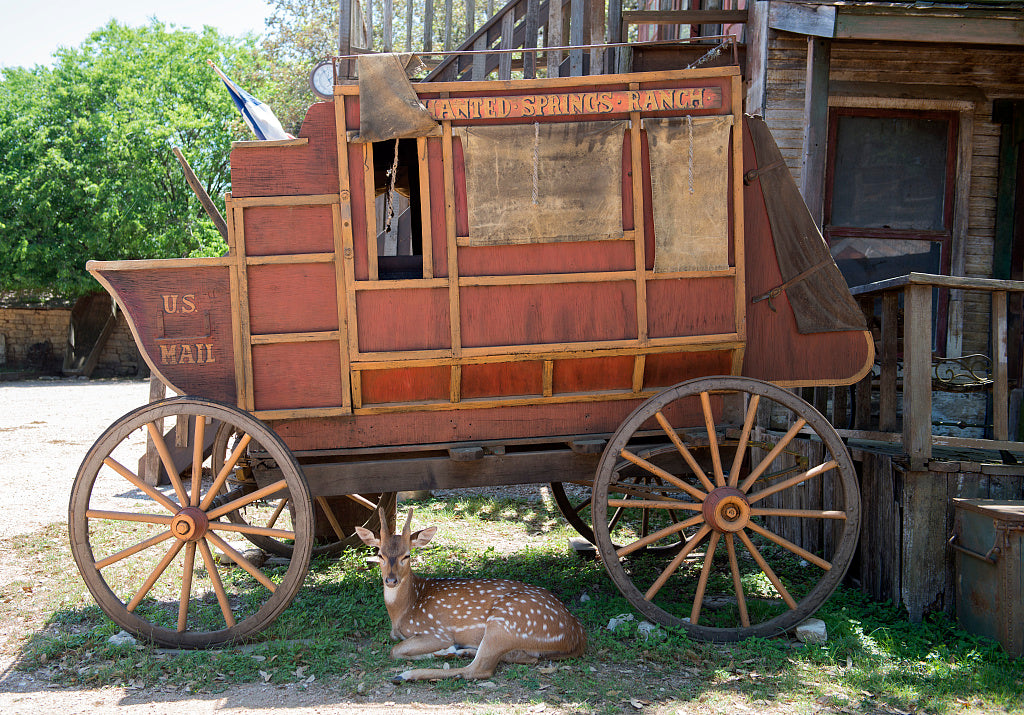 18 x 24 Photograph reprinted on fine art canvas  of A docile deer escapes the sun under a stagecoach at the Enchanted Springs Ranch an Old West theme park special- events venue and frequent movie and television commercial se