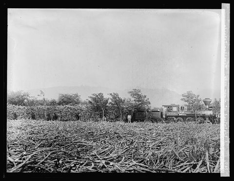 16 x 20 Gallery Wrapped Frame Art Canvas Print of  A trainload of sugar cane. Hawaiian Islands 1910 National Photo Co  81a