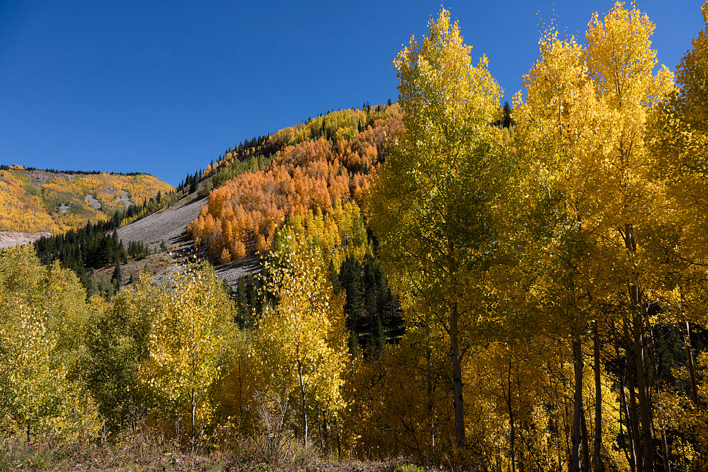 18 x 24 Photograph reprinted on fine art canvas  of Autumnal splendor amid the aspens above the highway between Silverton and Durango in San Juan County Colorado r75 42273 by Highsmith, Carol M.,