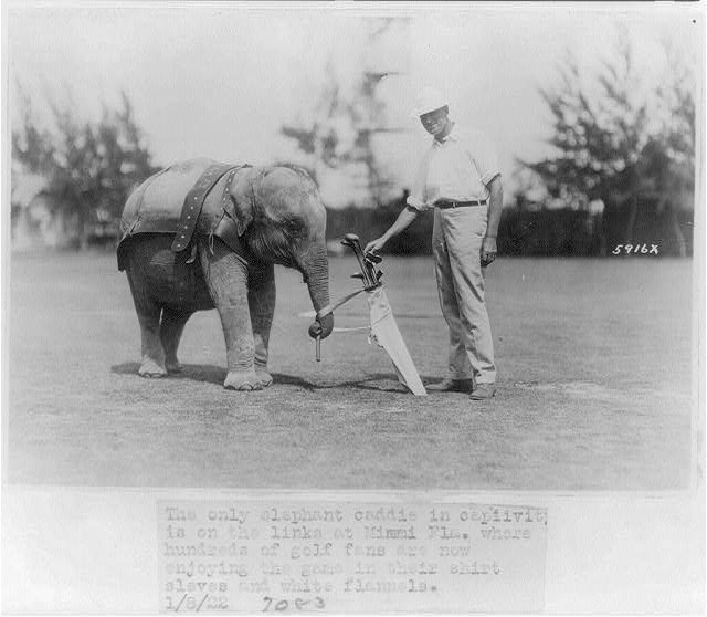 8 x 10 Reprinted Old Photo of Elephant caddie on Miami, Florida, golf course 1922 National Photo Co  37a