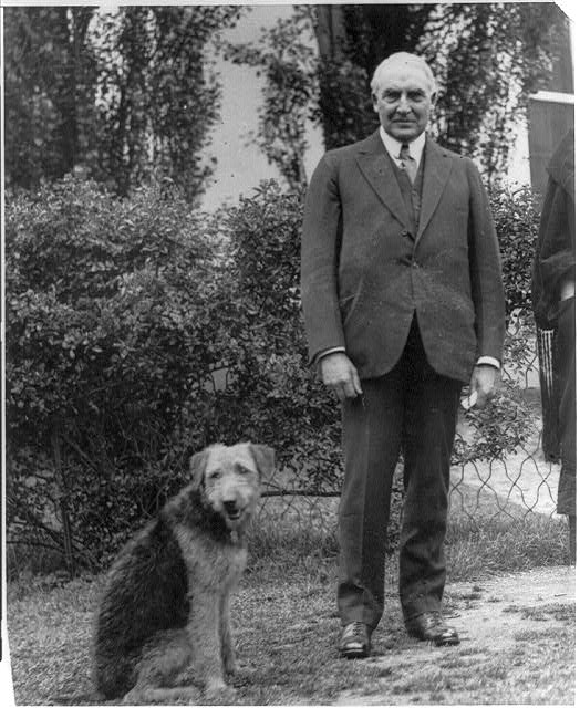 8 x 10 Reprinted Old Photo of [Warren G. Harding, full length, standing, facing front; with his airedale Laddie Boy] 1921 National Photo Co  89a