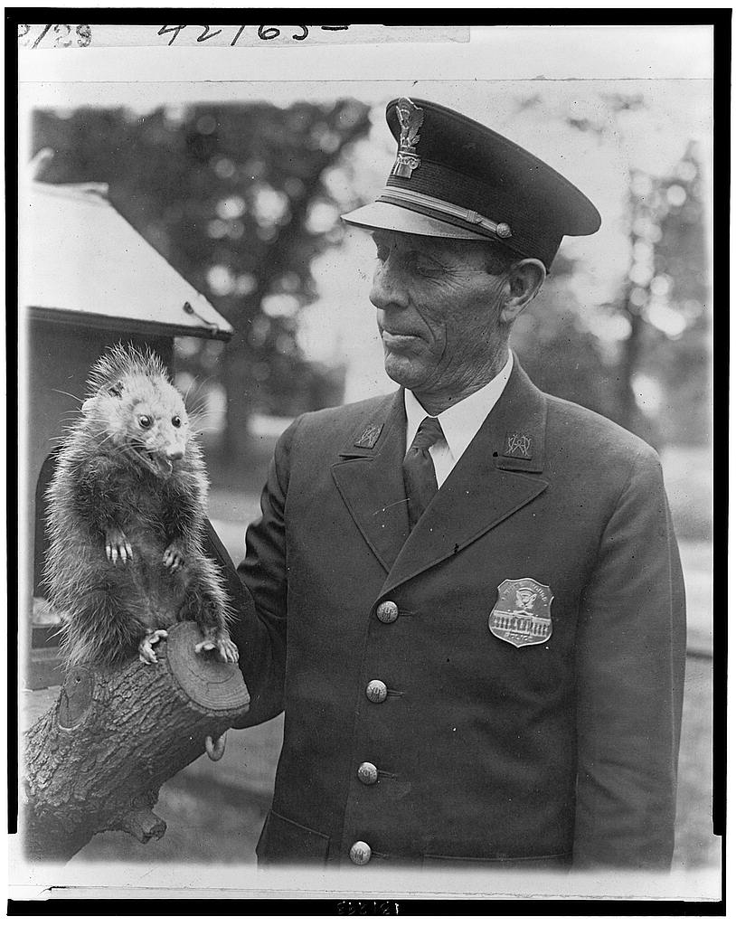 8 x 10 Reprinted Old Photo of Officer Snodgrass of the White House police force with the latest addition to the Hoover pets - a possum [sic] which recently strayed into the 1929 National Photo Co  09a