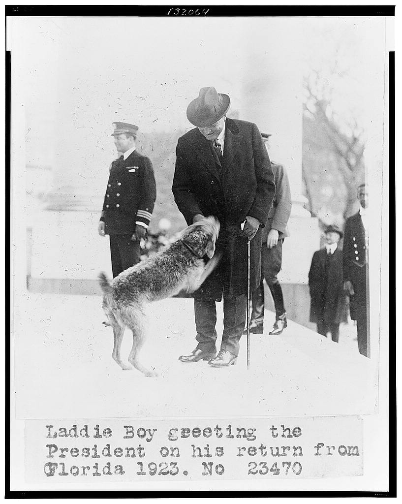 8 x 10 Reprinted Old Photo of Laddie Boy greeting the president on his return from Florida 1923 National Photo Co  02a