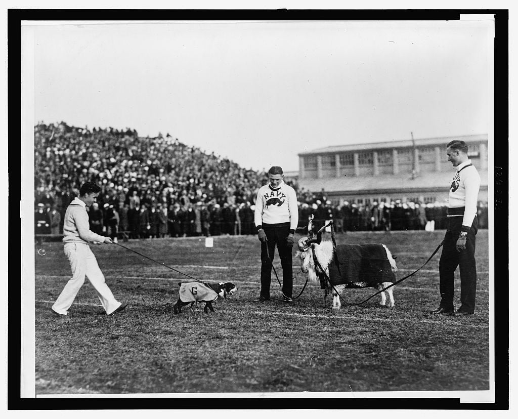 8 x 10 Reprinted Old Photo of Georgetown--Navy game, G. W. bulldog and Navy goat 1920 National Photo Co  69a