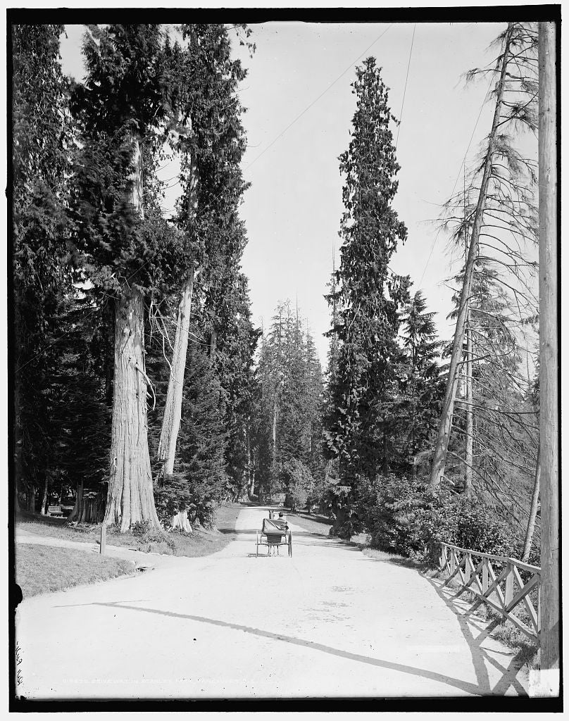 16 x 20 Gallery Wrapped Frame Art Canvas Print of Driveway in Stanley Park Vancouver B C  1902 Detriot Publishing co.  01a