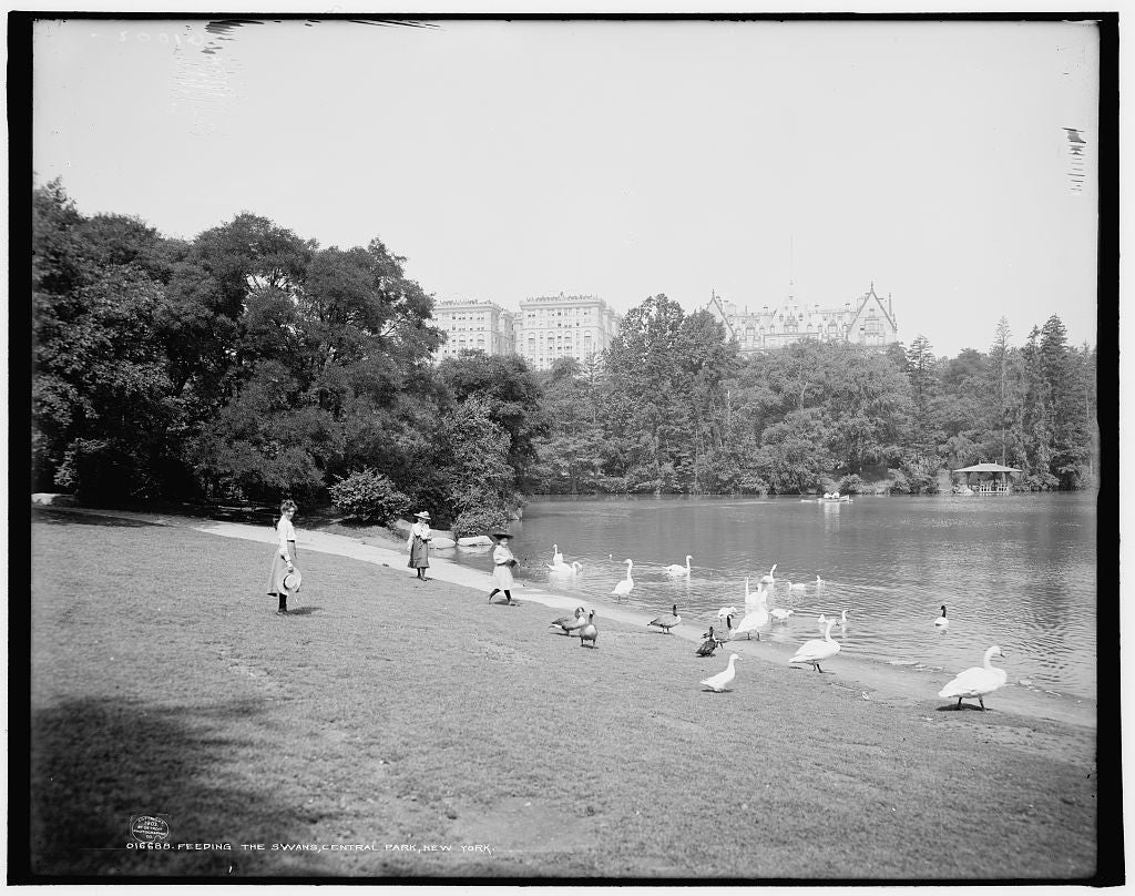 16 x 20 Gallery Wrapped Frame Art Canvas Print of Feeding the swans Central Park New York 1903 Detriot Publishing co.  48a