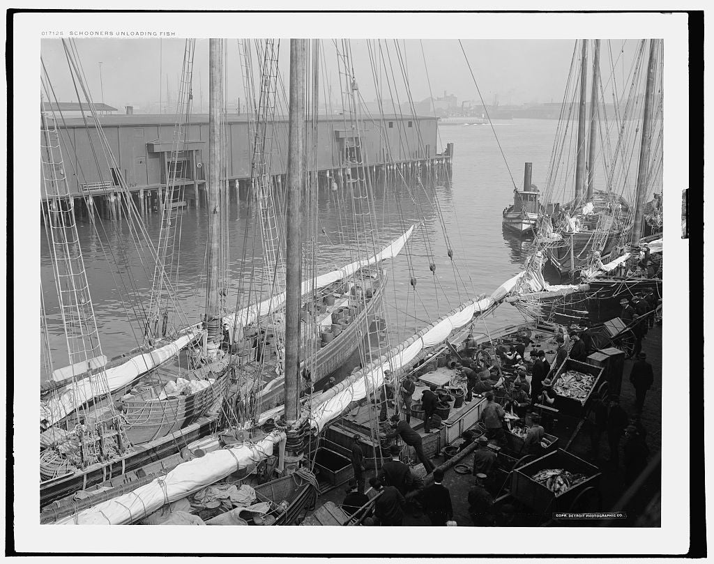 16 x 20 Gallery Wrapped Frame Art Canvas Print of Schooners unloading fish 1904 Detriot Publishing co.  01a