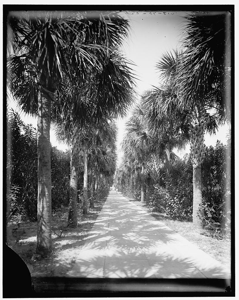 16 x 20 Gallery Wrapped Frame Art Canvas Print of Ocean walk Palm Beach Fla  1902 Detriot Publishing co.  17a
