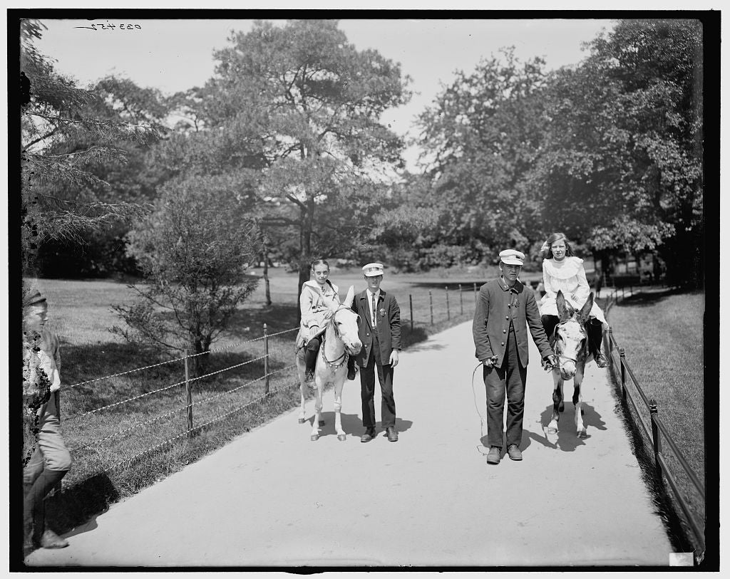 16 x 20 Gallery Wrapped Frame Art Canvas Print of Central Park donkeys in the park New York N Y  1905 Detriot Publishing co.  82a