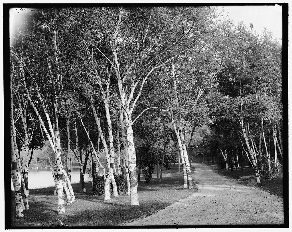 16 x 20 Gallery Wrapped Frame Art Canvas Print of A Roadway Como Park St Paul Minn  1905 Detriot Publishing co.  23a