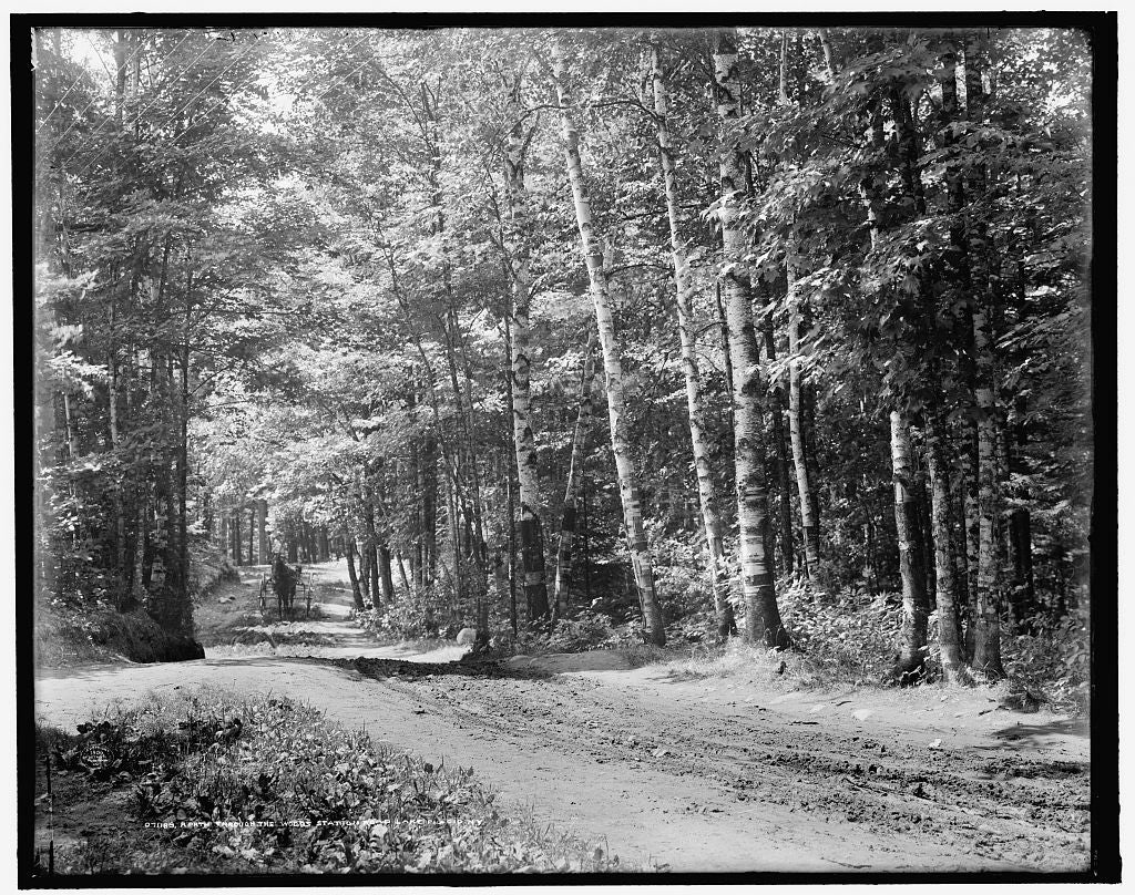 16 x 20 Gallery Wrapped Frame Art Canvas Print of  A Path through the woods station road Lake Placid N Y  1909 Detriot Publishing co.  03a