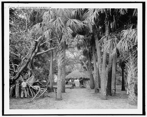 16 x 20 Gallery Wrapped Frame Art Canvas Print of  Alligator Joe's bungalow Palm Beach Fla  1910 Detriot Publishing co.  26a