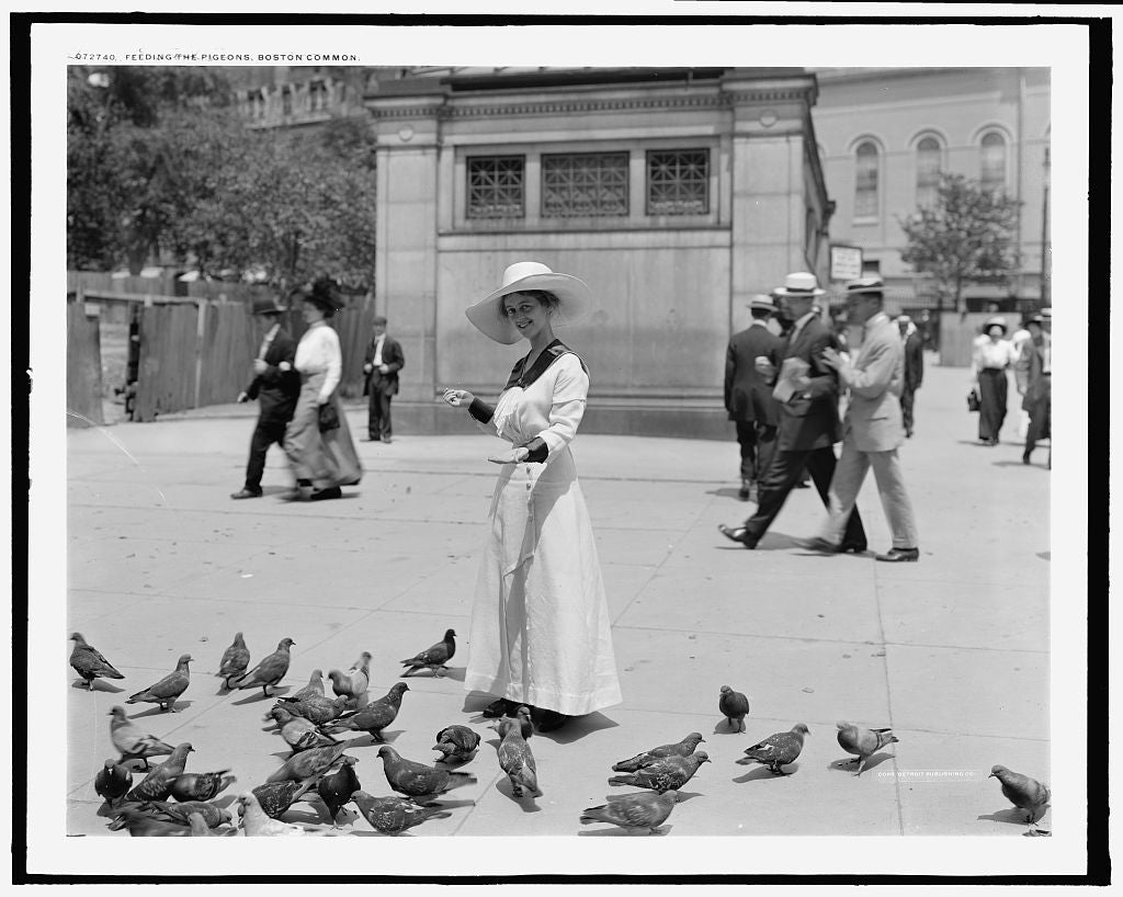 16 x 20 Gallery Wrapped Frame Art Canvas Print of Feeding the pigeons Boston Common 1915 Detriot Publishing co.  13a